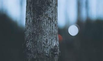 Los bosques gestionados, alternativa para una industria sostenible que reduce la huella de carbono y se alinea con la economía circular